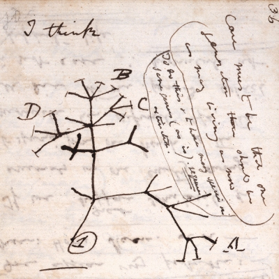 Darwin tree of life (large)