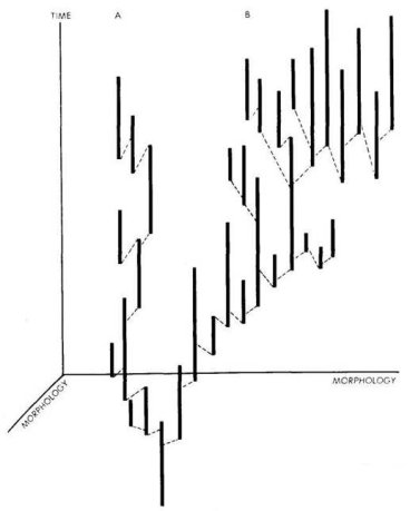 Gould--image from Punctuated Equilibrium 1972